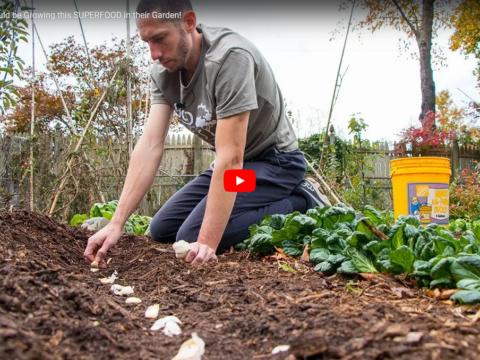 Superfood growing garden