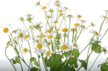 Herbs instead of drugs