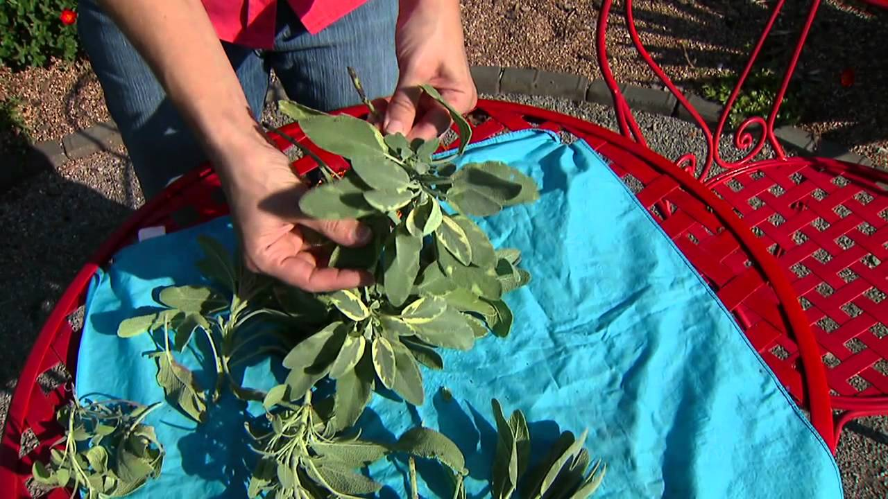 example of a multipurpose herb