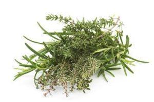 Nettle Plant