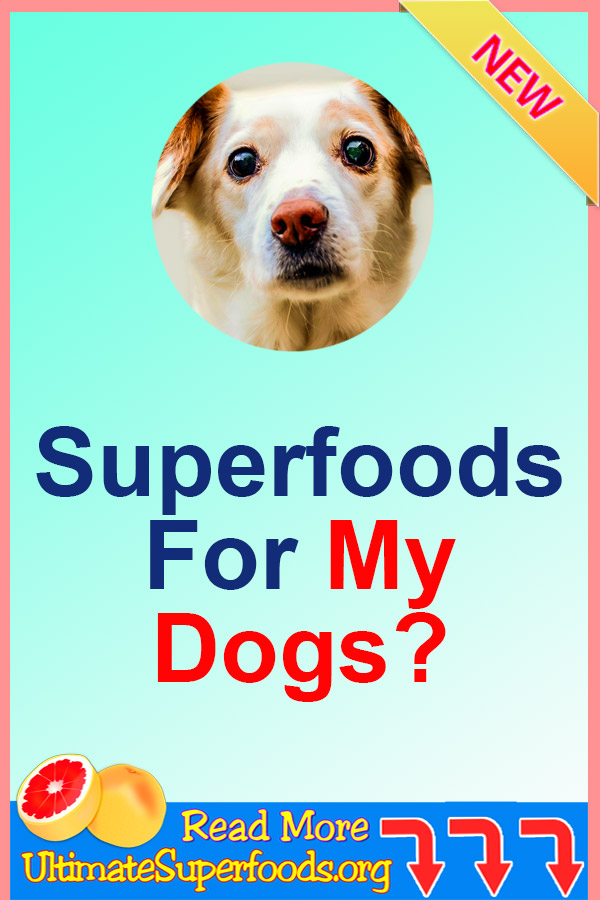 Superfood For Dogs
