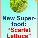 Superfoods-Lettuce
