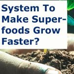 Making A Way To Make Superfoods Grow Faster?