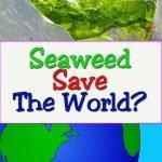 seaweed-superfood