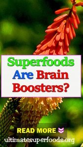 superfood-brain-booster