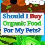 superfood-buy-organic-pets