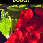 superfoods-antiinflammatory-food