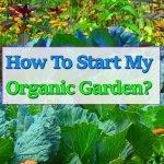 superfoods-organic-garden