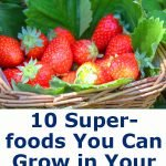 10 Superfoods You Can Grow in Your Backyard