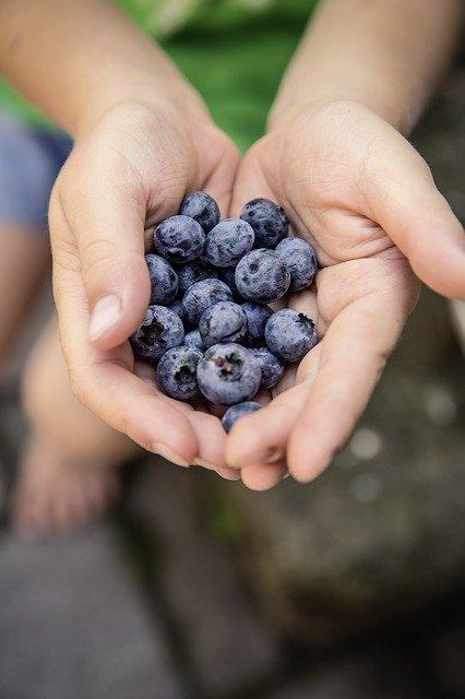 Goji Berries Bene
