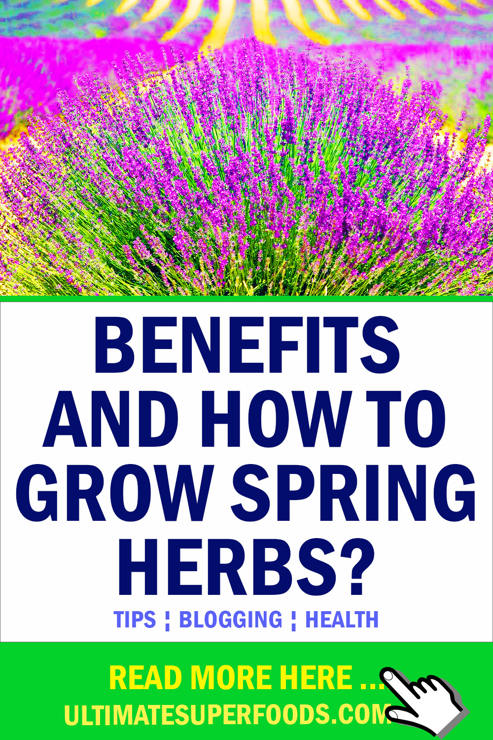 how to grow spring herbs?