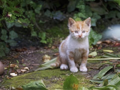 House plants poisonous to cats