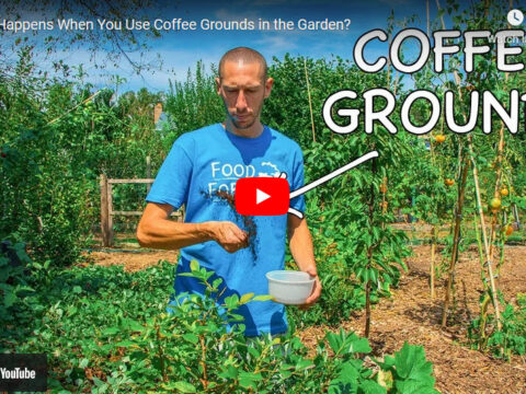 coffee-ground-good-for-plants